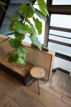 ベンチから木が生えている!?  これも『無相創』のもので、座面の板を開けると中の鉢に水やりができるしくみ。