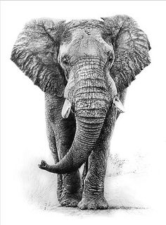 African elephant graphite pencil drawing by linda weil i wasn't this Tatoo Elephant, Realistic Elephant Tattoo, Elephant Tattoo Design, Elephant Love, Elephant Art, African Elephant, African Animals, Henna Elephant Tattoos, Elephant Sketch