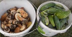 Hribii pot crește chiar și pe pervazul ferestrei! Puteți pregăti din ei o supă delicioasă ori îi puteți face separat. - Fasingur Indoor Plants, Pickles, Cucumber, Teak, Food, Gardening, Agriculture, Lawn And Garden, Inside Plants