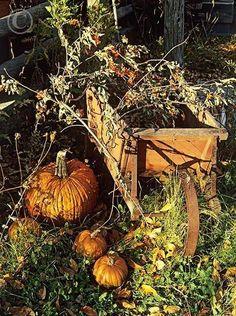 Love the old wheelbarrow!!! #oldwheelbarrow #wheelbarrow