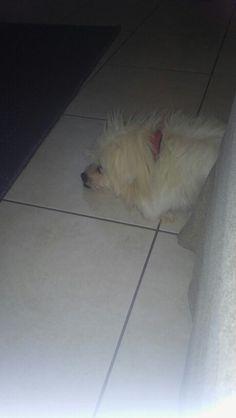 My dog  My life
