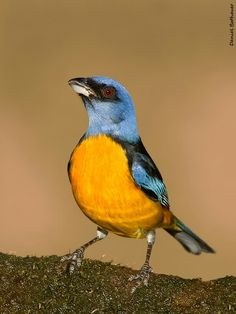 What a beautiful bird ...