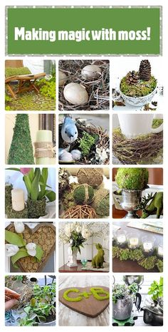 Magical moss ideas for your home & garden. These are some amazing projects using moss!!
