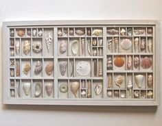 seashell art composition in a printers type box by xenasdad, $390.00 I DON'T THINK SO!