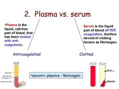 Blood Plasma vs Blood Serum: Plasma contains clotting factors, whereas serum does not. Medical Technology, Medical Science, Technology Careers, Energy Technology, Technology Gadgets, Technology Innovations, Medical Coding, Technology Articles, Phlebotomy Humor
