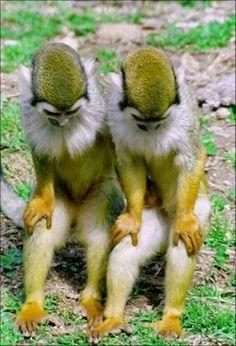 Monkey see; monkey do Primates, Mammals, Nature Animals, Animals And Pets, Monkeys Animals, Beautiful Creatures, Animals Beautiful, Beautiful Things, Beautiful Beautiful