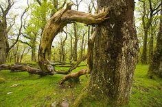 Bog forest, Sheeffrey Hills, County Mayo, Ireland