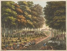 """Plate F from 'An Historical Account of the Campaign in the Netherlands'by William Mudford (1817). """"Skirt of the Forêt de Soigné, with a distant view of the village of Mont St. Jean. The Life Guards bivouacked here, on the night of the 17th, and the view represents the trees as they appeared when it was taken, namely, with the bark destroyed by the horses"""". Engraver James Rouse.The Battle of Waterloo: An Historical Account of the Campaign in the Netherlands London: Henry Colburn, 1817."""