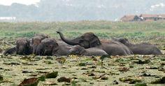 Elephants go through wetland forest