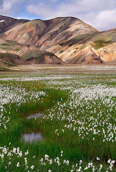 Cotton fields of Landmannalaugar, Iceland by Guðmundur Atli.