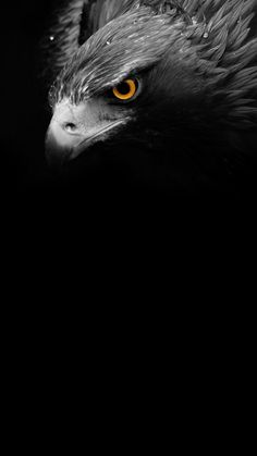 The Hustlrs is dedicated to help people in their way to Achieve Big in Life. It aims at providing you the best content that help you to transform your life. Eagle Wallpaper, Cute Wallpaper Backgrounds, Animal Wallpaper, Mobile Wallpaper, Eagle Images, Eagle Pictures, Aigle Harpie, Nature Animals, Animals And Pets