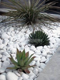 Jardines by marlamontes on pinterest modern gardens for Jardines con piedras fotos