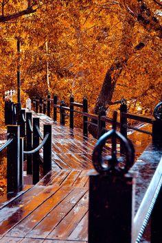 color, the bridge, path, walk