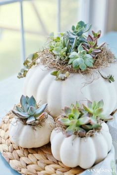 DIY Succulent Pumpkin Centerpiece - Sand and Sisal - Sukkulenten Deko Sisal, Pumpkin Planter, Diy Pumpkin, White Pumpkin Decor, Pumpkin Carving, White Pumpkins, Fall Pumpkins, Wedding Pumpkins, Suculentas Diy