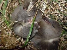 Baby Otters Born At Perth Zoo