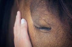 Habeas corpus para cavalo. Equinos também são gente! Um caso maravilhoso! - GreenMe.com.br Curly Horse, Sacred Groves, Marriage Thoughts, Animal Communication, Corpus, Brown Horse, Horse World, Human Emotions, Horse Head