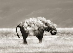 An Elephant in Sheep's Clothing. © Marina Cano. A bath dust in the Amboseli National Park.