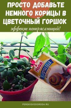 Indoor Flowers, Indoor Plants, Acorn Crafts, Vegetable Garden Tips, Square Foot Gardening, Plant Cuttings, Garden Trellis, Permaculture, Geraniums