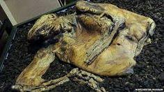 Image result for bog mummy
