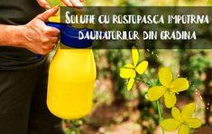 Mustard, Bottle, Mai, Farmer, Per Diem, Banana, Plant, Flask, Mustard Plant