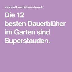 Die 12 besten Dauerblüher im Garten sind Superstauden.