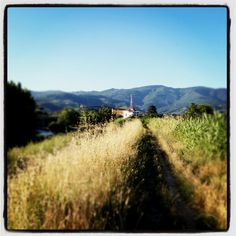 pistoia countryside in tuscany