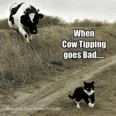 Funny Pictures, Funny jokes and so much more | Jokideo | Funny cow tipping | http://www.jokideo.com