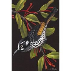 Australian New Holland Honeyeater, Mistletoe Australian Wildflowers, Australian Animals, Australian Art, New Holland Honeyeater, Bird Illustration, Bird Prints, Bird Art, Beautiful Birds, Animal Drawings