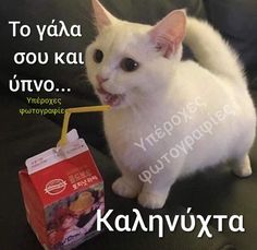 Good Night, Animals And Pets, Beautiful Pictures, Kitty, Humor, Memes, Cats, Happy, Love Flowers