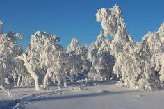 Saariselkä, Finland 8th February 2017