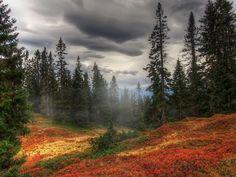 Forest mist - Pixdaus