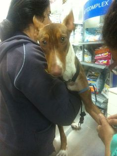 En el veterinario, Alba fue pesada, desparasitada y se le hizo el test de filaria. En unos días volverá para ser vacunada.