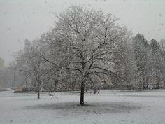 Sněžení 8.3.2016