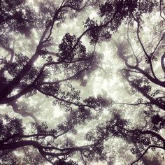 .@jethromullen | Misted canopy || #hongkong | Webstagram
