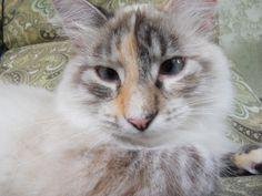 Pretty Princess Merlene