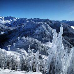 Frozen trees! Hollywood #stevenspass #pnw#blueskys Web Instagram User » http://followgram.me/i/357997166036528136_199048338