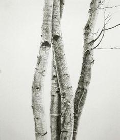 pencil drawings | pencil drawings of trees
