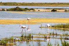 delta de l'ebre flamants roses Blog Voyage, Flamingo, Animals, Greater Flamingo, Tourism, Projects, Flamingo Bird, Animales, Flamenco