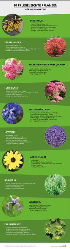 Lästige Gartenarbeit adé: Gestalten Sie Ihren Garten pflegeleicht & entdecken Sie 10 pflegeleichte Pflanzen – auch als Infografik zum Ausdrucken!