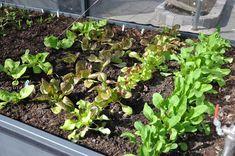 Forspiring til haven: Vi har samlet al den viden, du har brug for, for at komme i gang med at forspire dine planter til haven og få en større høst.