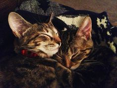 Two sisters adopted - inseparable