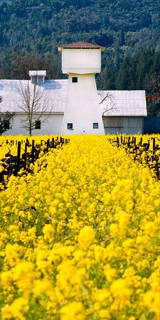 Go to the Mustard Festival in Napa Valley