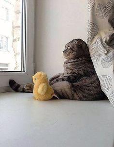 다 내려놓은 고양이, 창 밖에 뭐가...