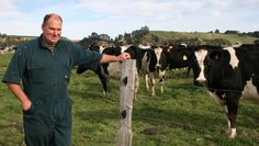 Wondering about all this crying over spilled milk? Here's how the current dairy farming crisis affects us all Kiwiana, Farming, New Zealand, Dairy, Milk, March, Chocolate, News, Business