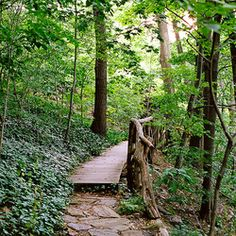 The 8 Best Outdoor Oases In NYC - North woods in Central Park