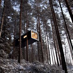 37 Luxury Tree Houses You'd Like to Move Into Luxury Tree Houses, Cool Tree Houses, Treehouse Hotel, Treehouse Ideas, Tree House Designs, Farm Stay, You Are The World, In The Tree, Little Houses