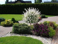 Possibly one of these or more, could be put in a position to soften the look of the fence. Backyard Garden Design, Lawn And Garden, Garden Paths, Outdoor Landscaping, Front Yard Landscaping, Small Gardens, Outdoor Gardens, Garden Cottage, Garden Borders