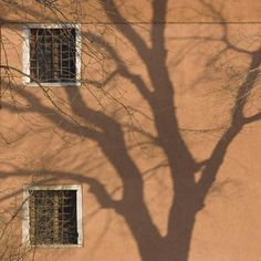 size: Photographic Print: Shadow of Tree on Orange Venice Building Exterior by Mike Burton : Aesthetic Light, Cream Aesthetic, Brown Aesthetic, Aesthetic Vintage, Aesthetic Photo, Aesthetic Pictures, Aesthetic Backgrounds, Aesthetic Wallpapers, Brown Walls