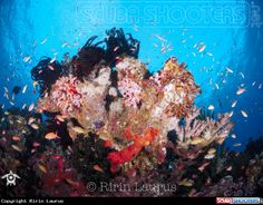 Colour of Banda Sea - Indonesia