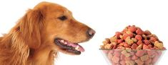 #healthydogfoodbrands Dog Training Methods, Basic Dog Training, Dog Training Techniques, Training Your Puppy, Training Dogs, Healthy Dog Food Brands, Puppy Obedience Training, Positive Dog Training, Easiest Dogs To Train